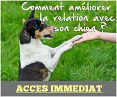 dresser chien education canine positive