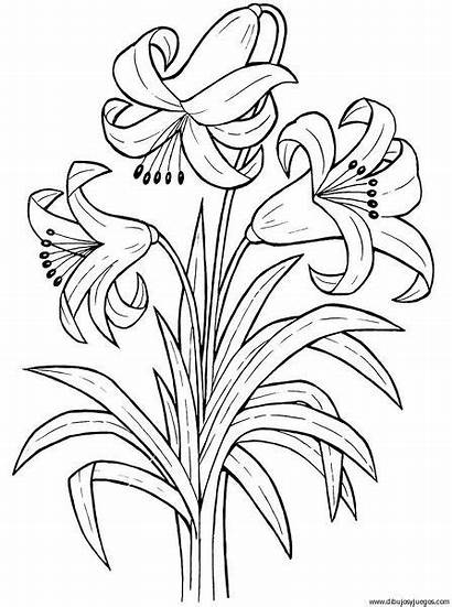 Flores Dibujos Flower Coloring Colorear Pintar Dibujar