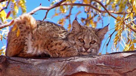 Animals Petrified Forest National Park (U S National