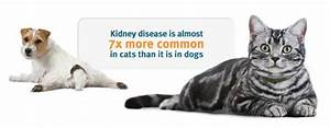 Kidney Problems In Cats  Symptoms  Treatment  Final Stages