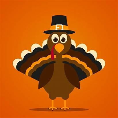 Turkey Thanksgiving Vector Happy Right Pardon Illustrations