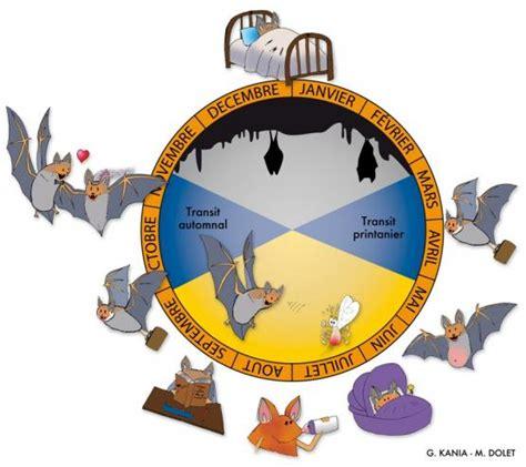 biologie des chauves souris carri 232 res 224 chauves souris