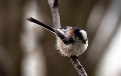 Birds Trees Allwallpaper Wide