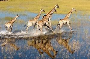 Fax Form Okavango Delta Botswana Tourism Organisation
