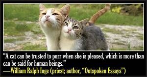 50 Famous Quotes About Cats | Funny cat quotes, Sad cat ...