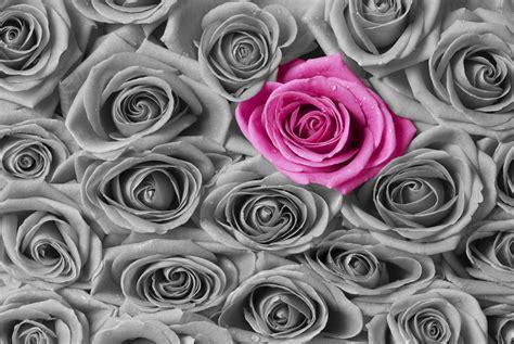 Roses  Pink And Grey  Wall Mural & Photo Wallpaper