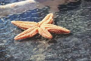 18 Best Marine Biology The Charlotte Mason Way Images On