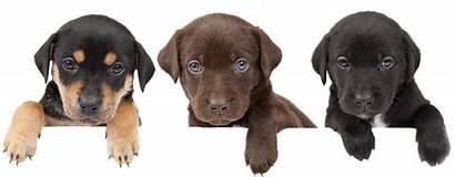 Dog Dogs Bronchitis Health Pancreatitis Yorkie Ginger