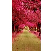 Pink Trees Walkway IPhone 6 / Plus And 5/4 Wallpapers