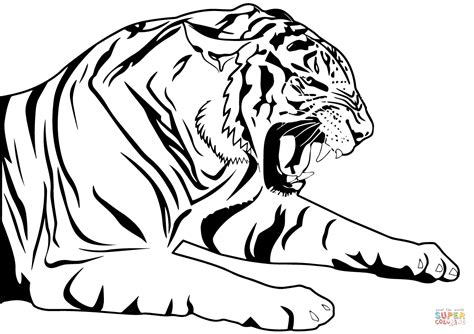 tiger coloring page  printable coloring pages