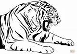 Tiger Coloring Pages Printable Tigers Head Tooth Zum Sabre Malvorlagen Ausmalbilder Saber Sabertooth Drawing Fuer Kinder Kostenlose Wenn Ausdrucken Du sketch template