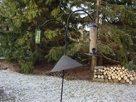 how to keep squirrels out of bird feeders how to keep squirrels out of garden keep squirrels out of