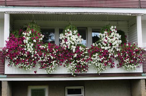 Kübelpflanzen Für Den Schatten by Balkonpflanzen Schattig Winterhart Wohn Design