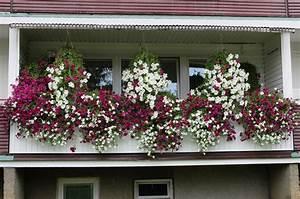 Pflanzen Im Schatten : nordbalkon diese pflanzen gedeihen auch im schatten ~ Orissabook.com Haus und Dekorationen
