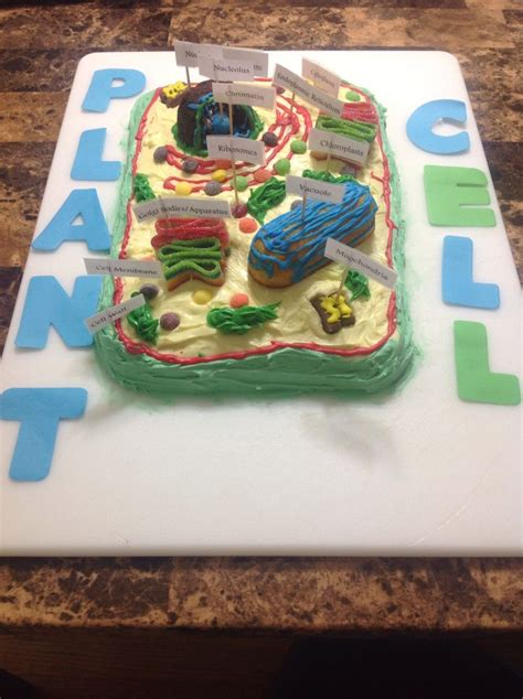 plant cell cake model trey s science project plant cell cake project