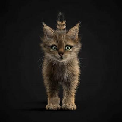 Kittens Behance