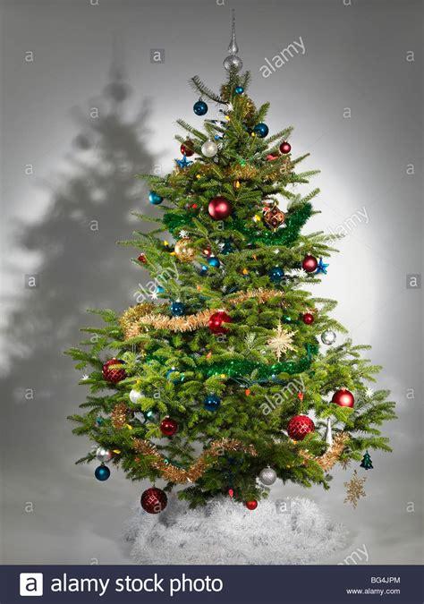 real christmas trees stock  real christmas trees