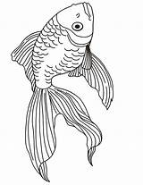 Coloring Goldfish Pages Realistic Drawing Popular sketch template