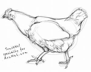 How To Draw A Hen Step By Step Arcmelcom
