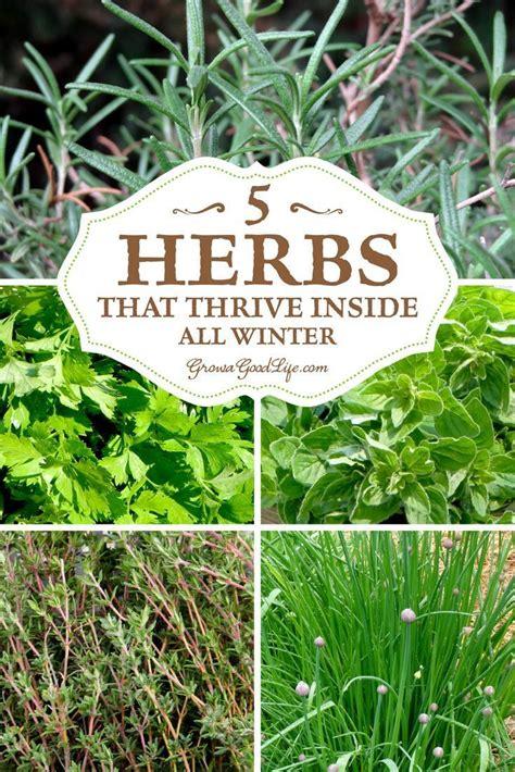 Growing Herbs Inside by Grow Herbs Indoors 5 Herbs That Thrive Inside Herbs