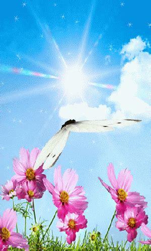 gif mariposas en flor gifmaniacoses