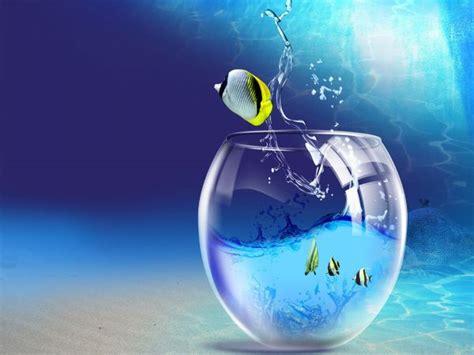 aquarium immerg 233 image n 176 275 animaux vari 233 s