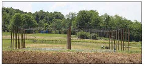 Hops Trellis Design by Constructing Hop Yard Trellis System