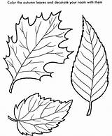 Leaf Coloring Pages Printable sketch template