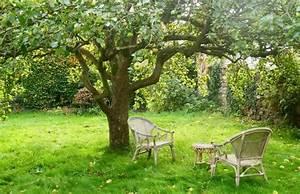 How To Prune Apple Trees