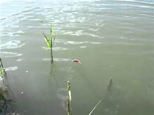 Ferocious Pike Attack - Awesome! - YouTube