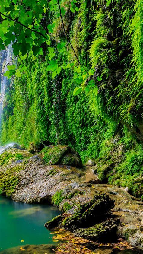 Free Tropical forest HD Wallpaper ⋆ WallpaperPURE