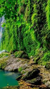 Free, Tropical, Forest, Hd, Wallpaper, U22c6, Wallpaperpure