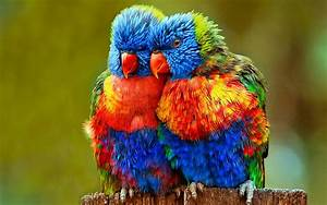 Small Colorful Parrots Wallpapers Hd : Wallpapers13.com