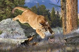 Wildlife Art - Mountain Lion Painting by Dale Kunkel Art