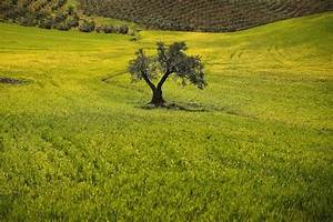Spanish Drought Prompts Fears of Widespread Olive Oil ...