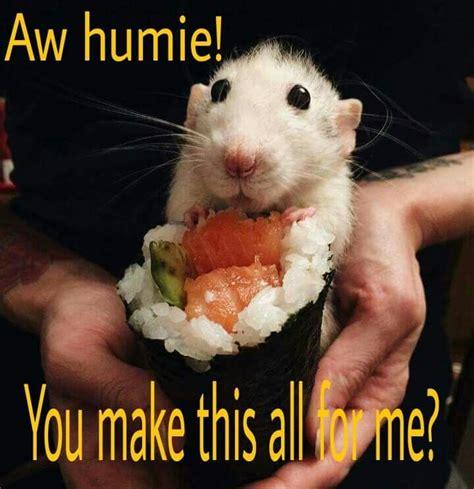 Rodent Meme - 1000 images about cutie rat atoulie on pinterest