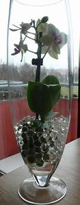 Orchideen Im Glas : orchidee im glas lassen pflanzenpflege orchideen ~ A.2002-acura-tl-radio.info Haus und Dekorationen