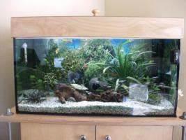L Form Aquarium : aquarium 120l in g tersloh rechteckig quader aquarium ~ Sanjose-hotels-ca.com Haus und Dekorationen