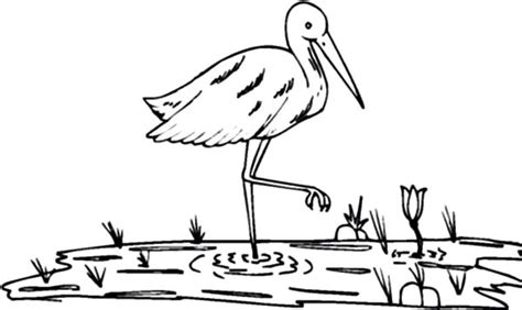 crane bird  paddy field coloring pages netart