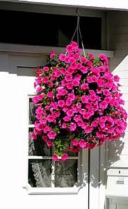 Welche Pflanzen Für Balkon : blumenampel ~ Michelbontemps.com Haus und Dekorationen