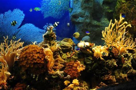 Animated Aquarium Wallpaper For Mobile - aquarium wallpaper 183 free beautiful high