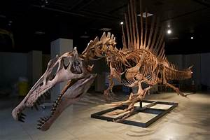 The Five Most Freakin' Dangerous & Deadliest Dinosaurs Of ...