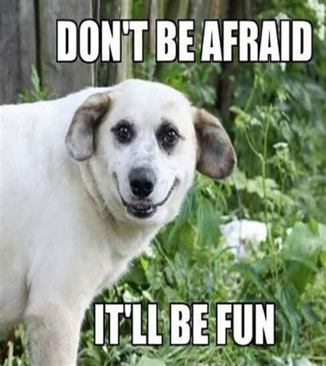 funny dog pictures  captions   bored