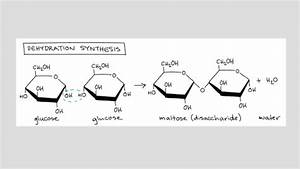 Introduction To Macromolecules  Article