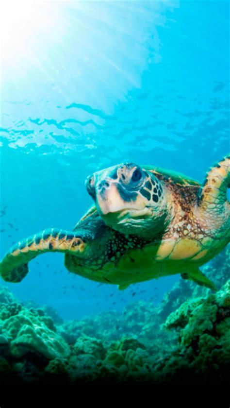 animated sea turtle wallpaper iphone wallpapersafari