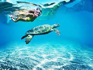 turtle in tobago caribbean travel inspiration