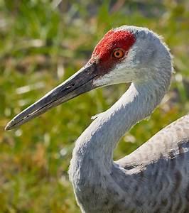 Animal Qui Commence Par U : oiseaux qui commence par f oiseaux qui commence par f les oiseaux en fiches ~ Medecine-chirurgie-esthetiques.com Avis de Voitures
