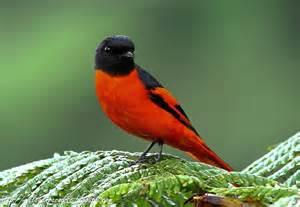 SOUTH EAST ASIA BIRDS - Malaysia birds paradise: ID: Grey ...