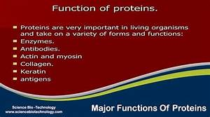 What Are Major Functions Of Proteins