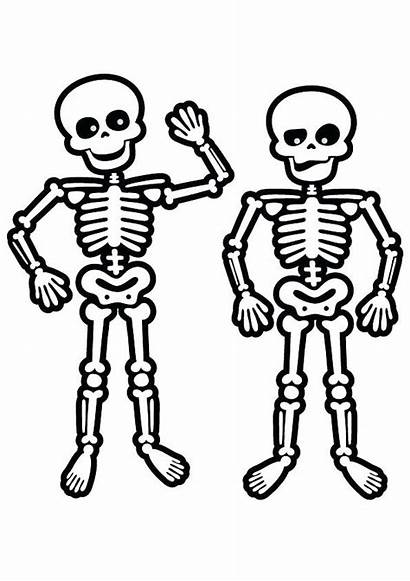 Skeleton Coloring Pages Skeletons Human Face Drawing